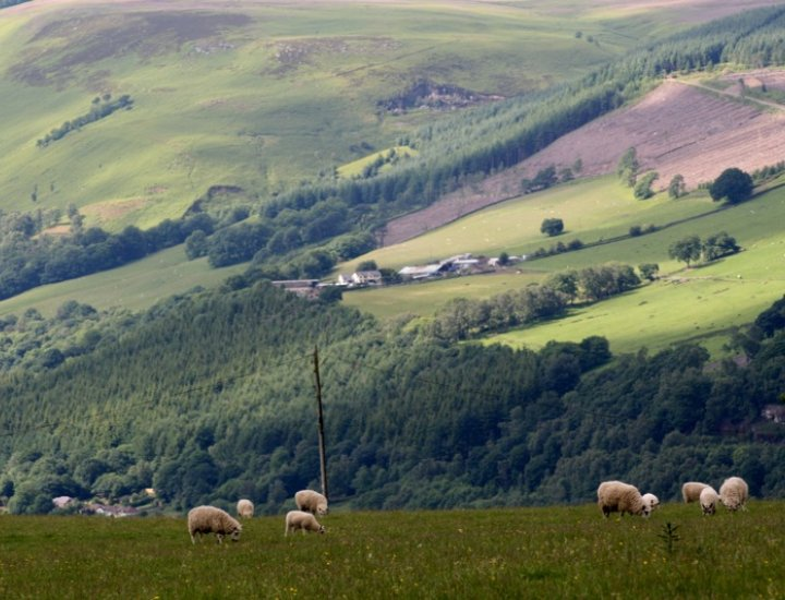 Above Penrhiwceiber