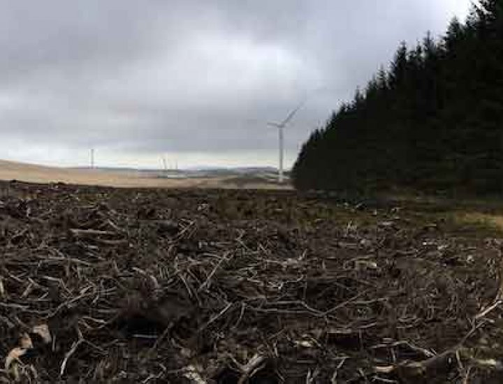 Deforestation above Cynon Valley for wind turbines