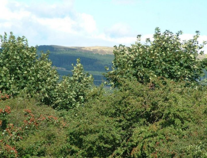 View looking from Penywaun to Bryn Pica